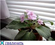 наши домашние цветники - Страница 2 1bf91831327dt
