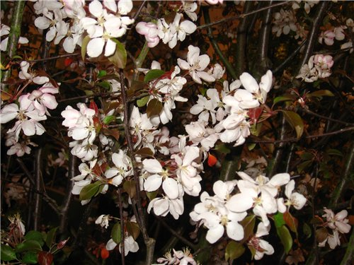 Ландшафт и приусадебное хозяйство - Весна 2009. - Страница 2 Dba9ed988a08