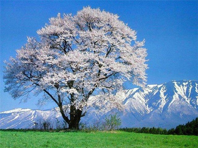 Красивые пейзажы Японии F6a90151bc1b