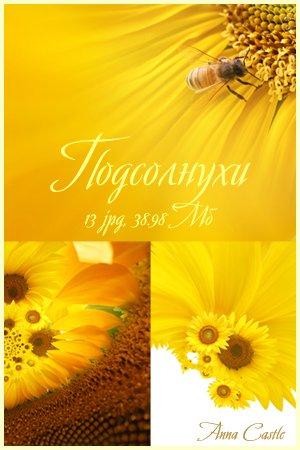 Клипарты  ::  Цветы-разные 8e52ffcd1d6f