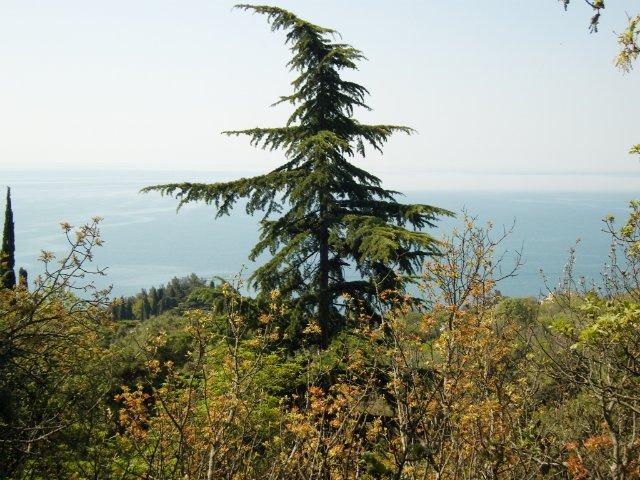 Крым. Никитский ботанический сад. 0601527522aa