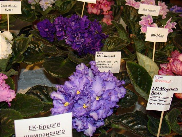 Международая выставка «Цветы.Ландшафт .Усадьба 2010» Астана - Страница 4 Cddecc0bcc3d