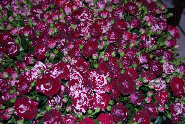 Международая выставка «Цветы.Ландшафт .Усадьба 2010» Астана - Страница 4 E31e1895a01e