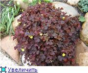 Растения - агрессоры D5be9b18410bt