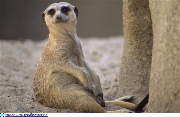 Фотографии разных животных 438f4033a9a2t