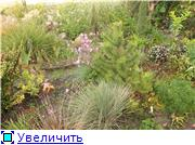 Cад Людмилы Ивановой из черкасс 53cae628d79ft