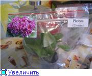 Наши любимые домашние растения! - Страница 10 36bfd0a9c8abt