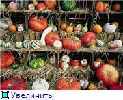 Наши домашние растения - Страница 2 4c1022b7c1b9t