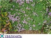 Растения для альпийской горки. - Страница 2 E977f6e46b27t