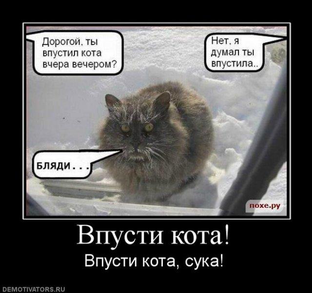 Коты, кошки, котята и все что с ними связано - Страница 5 2494b0981f76