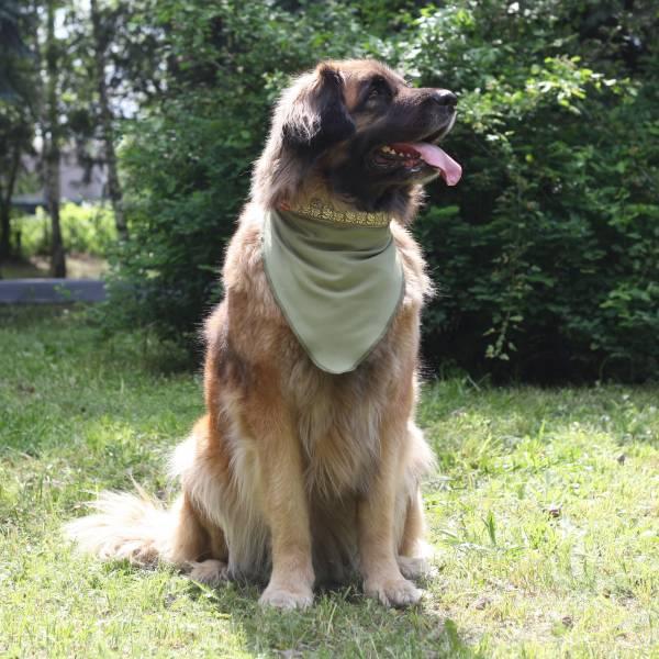 """Интернет магазин товаров для собак """"Волча"""" 1701b193ff9e9e0da2123cf56b2da1d4"""
