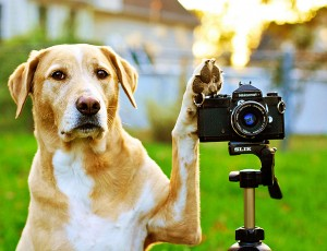 """Интернет магазин товаров для собак """"Волча"""" 82394a773c194efd0716439de830fc5a"""