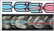 Cantos de los reales de a 8 tipo columnario. 230287_10207968467663014_2364199462051829096_n