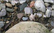 mrazuodolné opuncie - rod Opuntia IMG_2053
