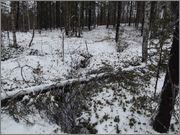 Зимний пейзаж DSCF2535