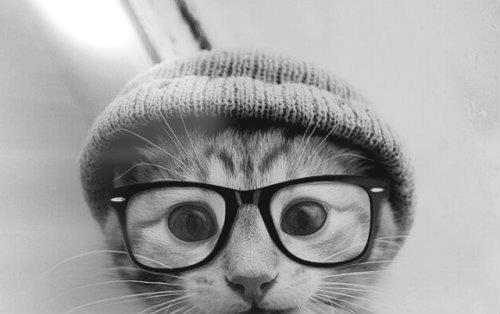 مآدمتُ أنآْ موِجو و و ده فَ جميعُ النساء أشآععه - صفحة 2 Beautiful-black-and-white-cat-cute-Favim.com-676080