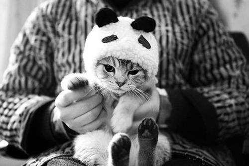 مآدمتُ أنآْ موِجو و و ده فَ جميعُ النساء أشآععه - صفحة 2 Beautiful-black-and-white-cute-fashion-Favim.com-676091