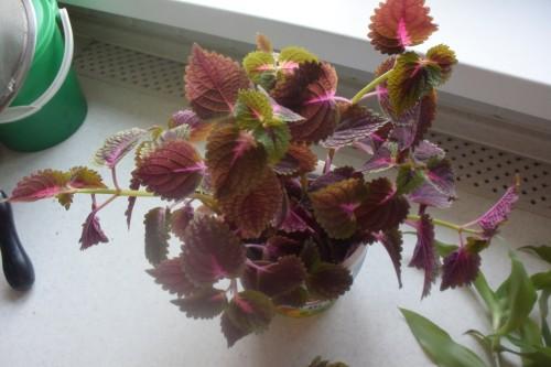 Отдам цветы и отростки 473e72d8c2e00d1a189e71100f29da72