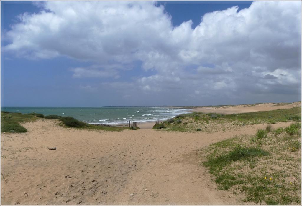 Dune vivante  P1080935