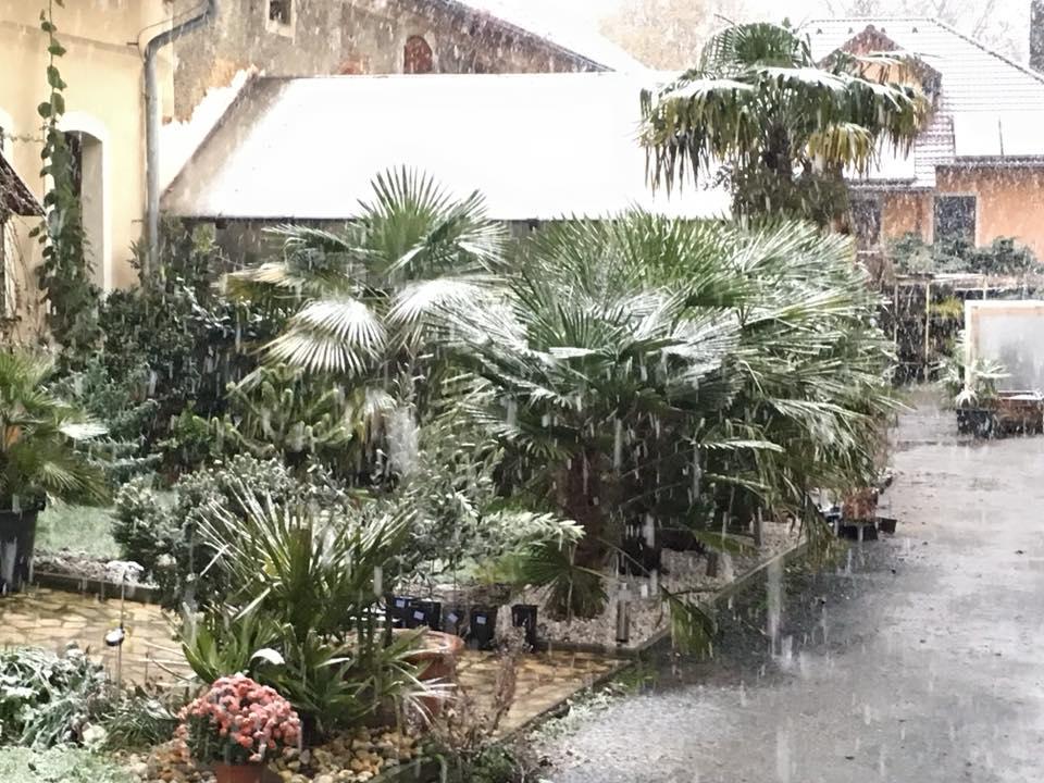Palmy pod sněhem - Stránka 2 23380419_1491970574185433_8090311519610942439_n