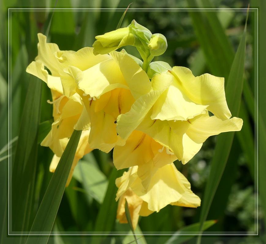 encore des flore 's P1090961