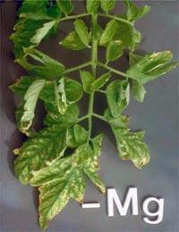 Nutrição de Plantas Aquaticas: Função, Deficiência e Fertilização. Nutricao_vegetal_6