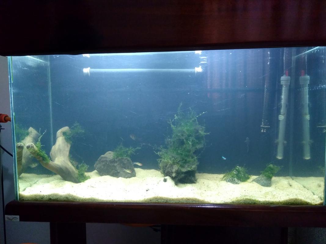 Novo aquário! - Página 11 IMG_20180708_173004755_HDR