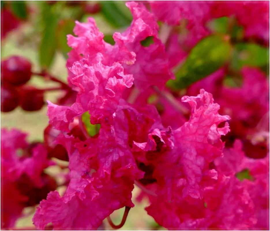 Fuschia color P1100105