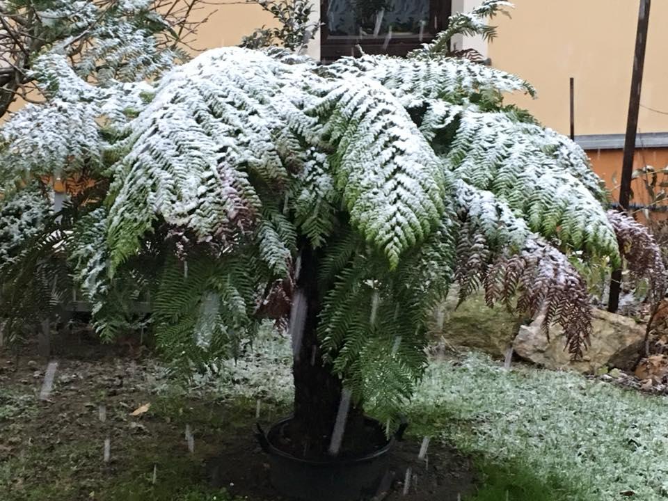 Palmy pod sněhem - Stránka 2 23559901_1491970577518766_1474388836916757861_n