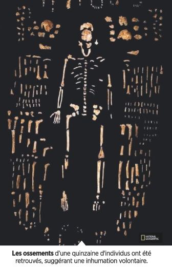 Homo naledi Image