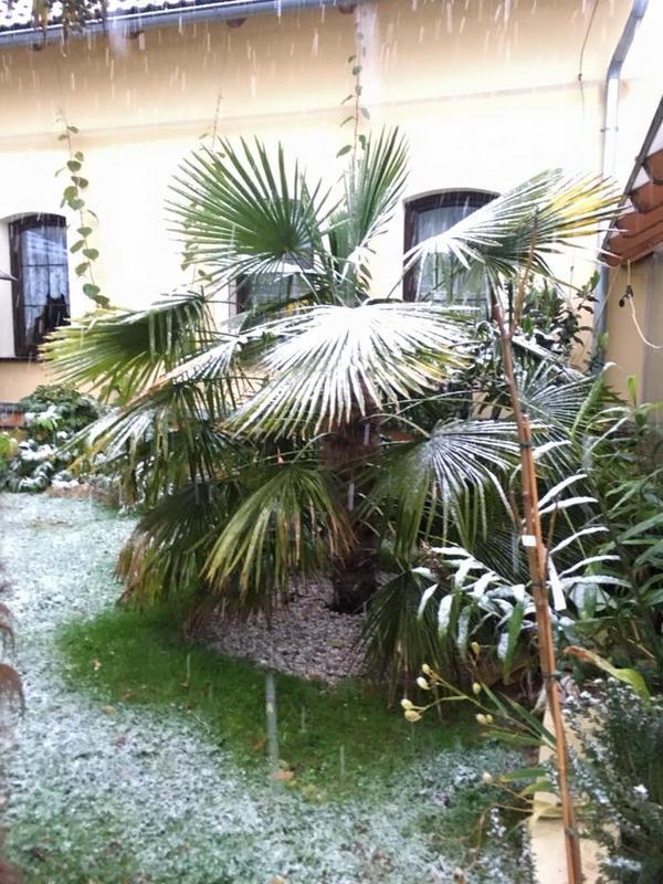 Palmy pod sněhem - Stránka 2 23434926_1491970660852091_6788841788436708020_n