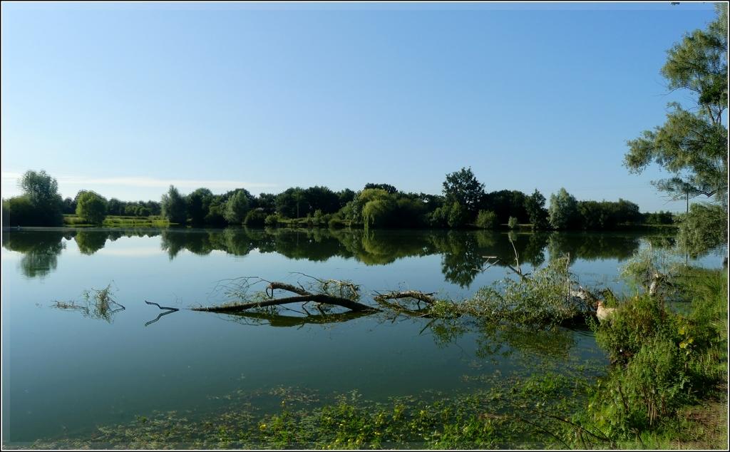 découverte d'un bel étang de loin ...mais mal entretenu !! P1090865