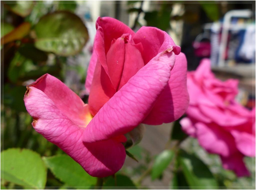 encore des flore 's P1090953
