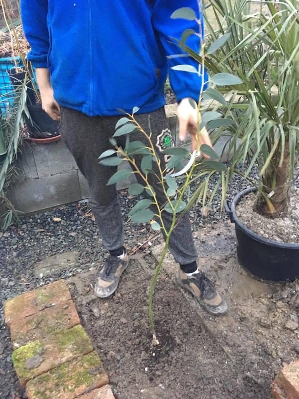 Eucalyptus 16910599_1924077264490243_360147023_o