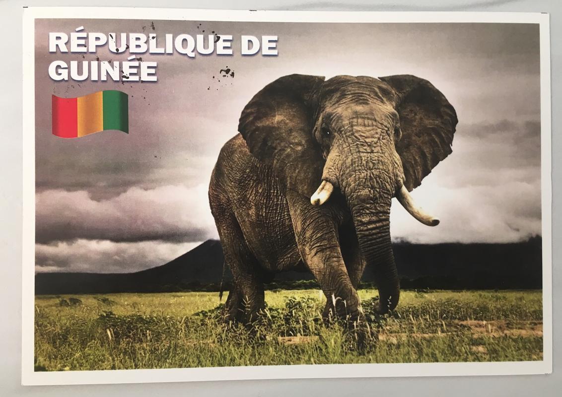 Postales deade Guinea (Julio 2018) IMG_1723