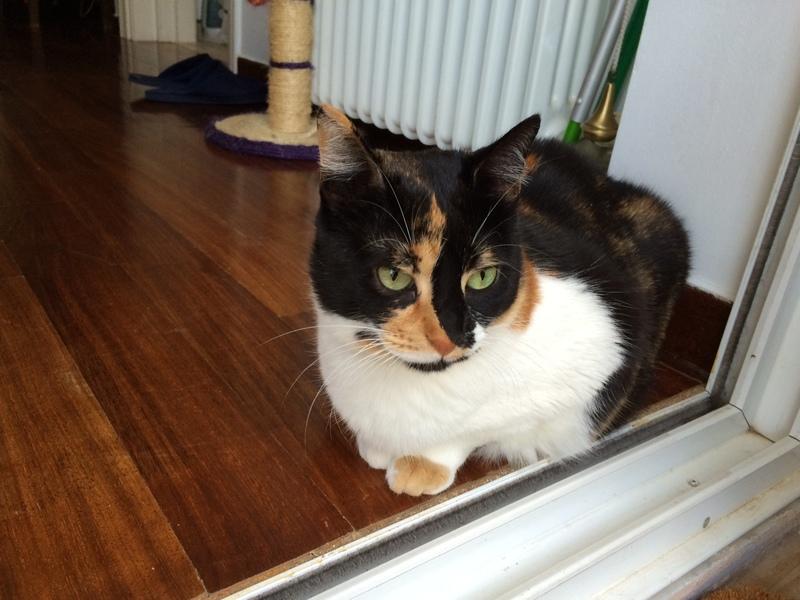 Κάρι, μια υπέροχη γατούλα και τα 4 μωράκια της - Σελίδα 11 IMG_9901