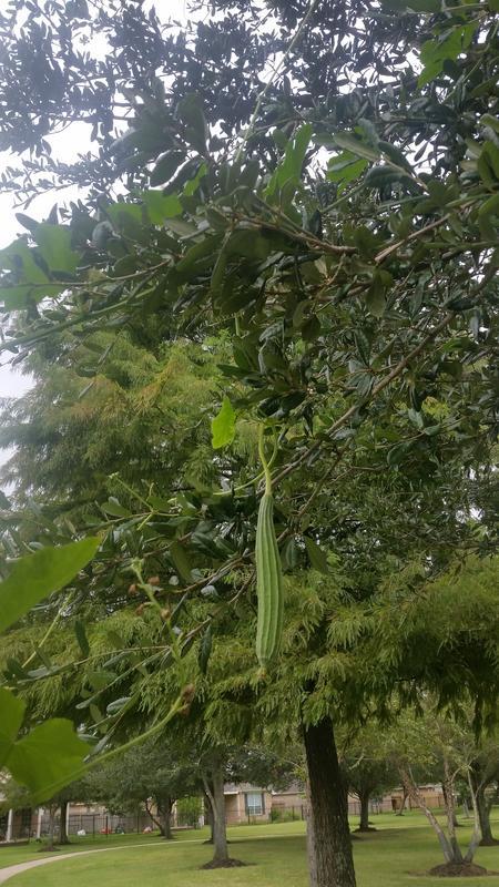 Vườn Rau Tháng 8 20180829_155340