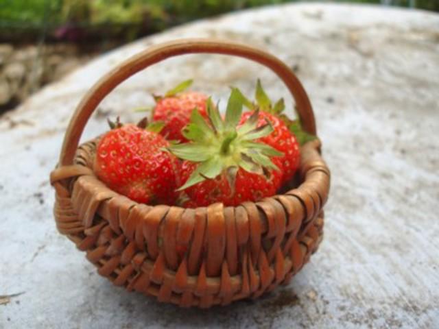 les outils pour le jardinage indispensables ou non - Page 2 Petit_panier_fraises