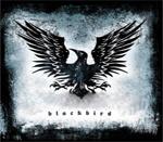 blackbird_jm