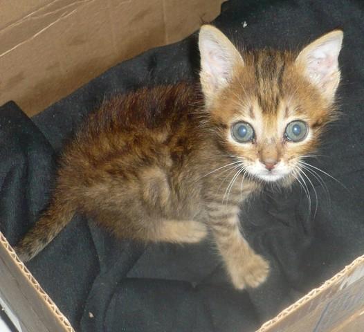 Ma Petite gatita de 1 mes en adopción- Écija Petit2