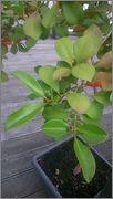Určení druhu rostliny - Stránka 4 DSC_0169