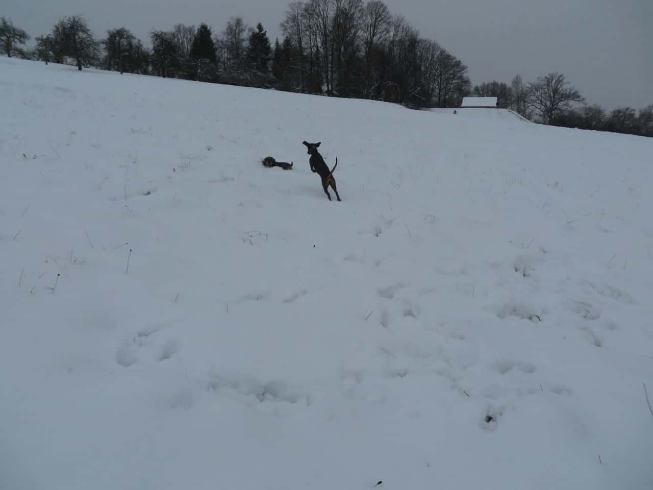 Schneemonster IMG_1446