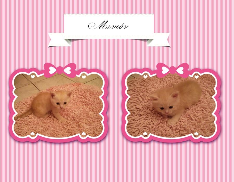 Χαρίζονται γατάκια (μαμά Περσίας) Baby_cats_01