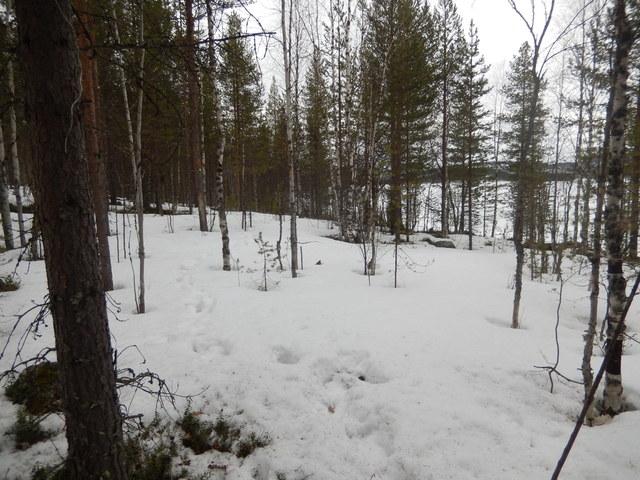 А в лесу сейчас хорошо! - Страница 4 DSCN2096