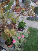 Léto na zahradě P5251092