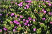 Určení druhu rostliny - Stránka 4 P5101809_2