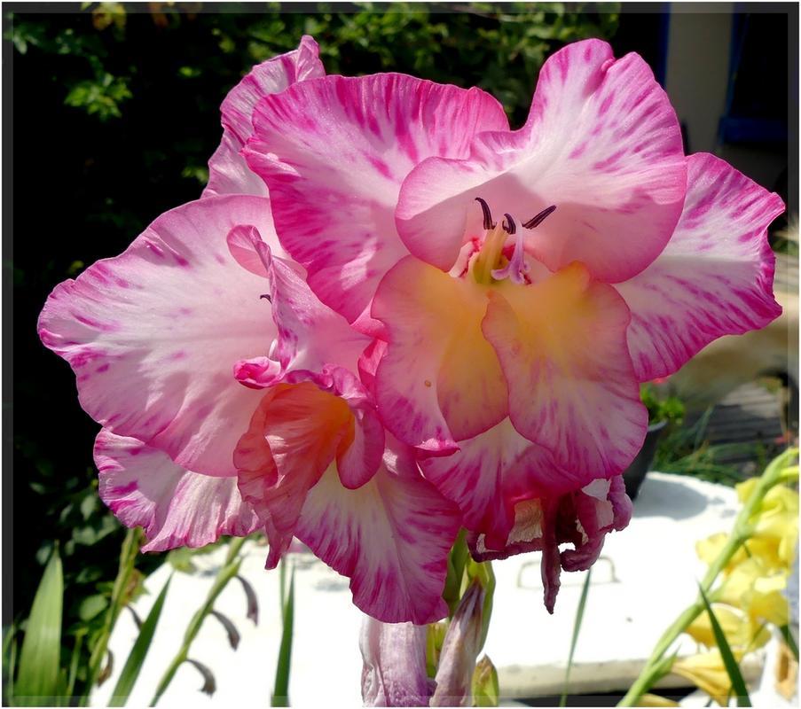 encore des flore 's P1090971