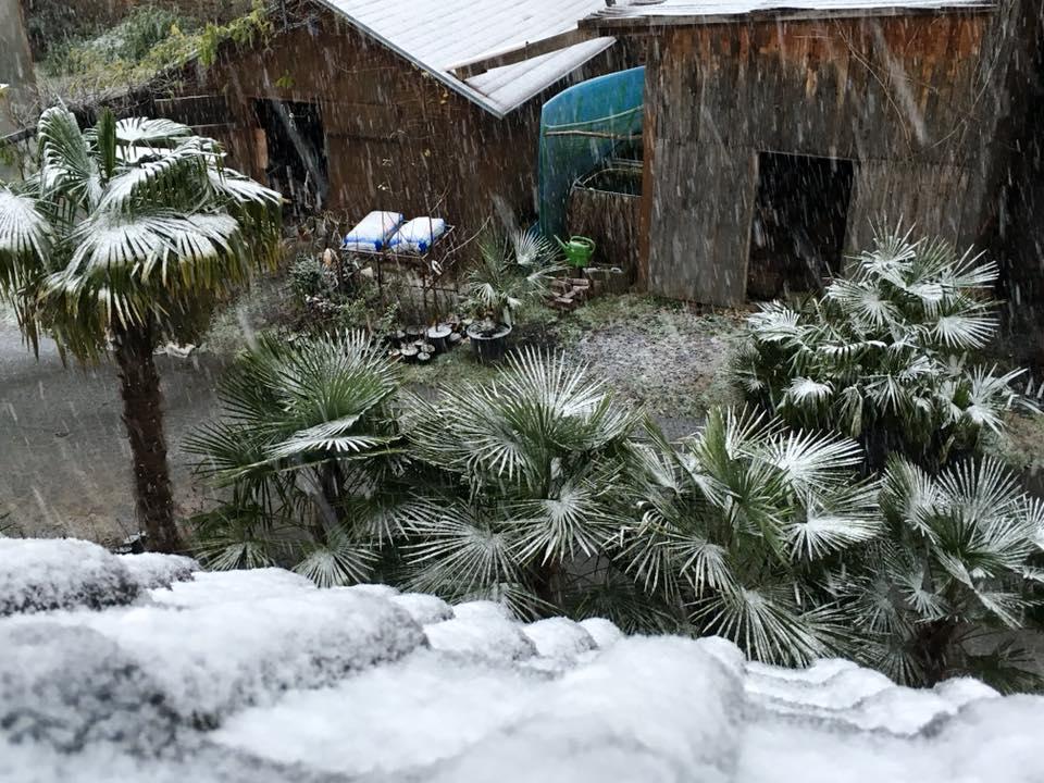 Palmy pod sněhem - Stránka 2 23380419_1491970620852095_5783981287148151601_n