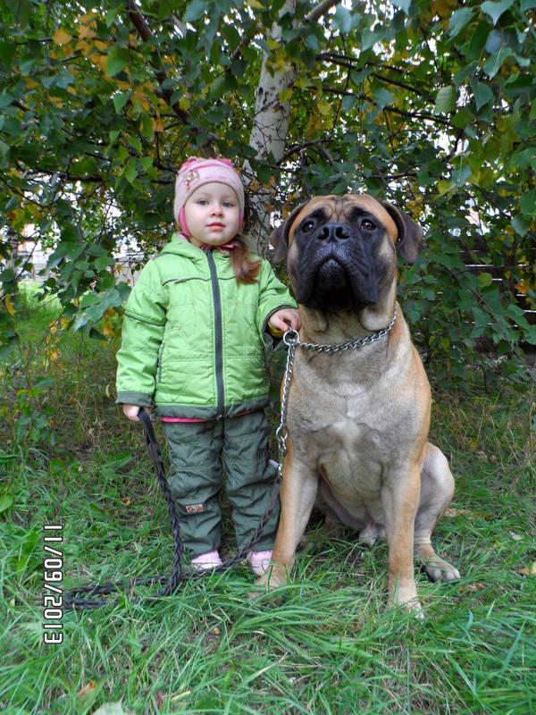 """Фотографии """"Бульмастиф и дети"""" - Страница 3 HW3lJ"""