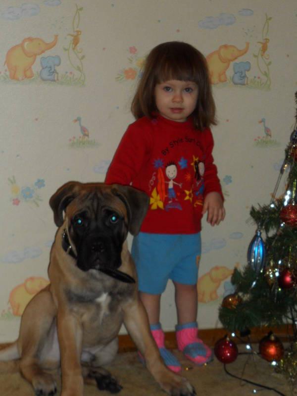 """Фотографии """"Бульмастиф и дети"""" - Страница 3 NmyMg"""